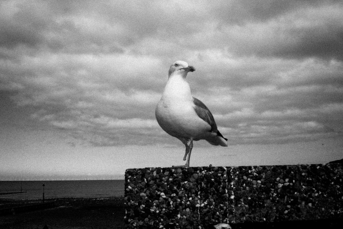 One Legged Seagull, Llandudno, 2016.
