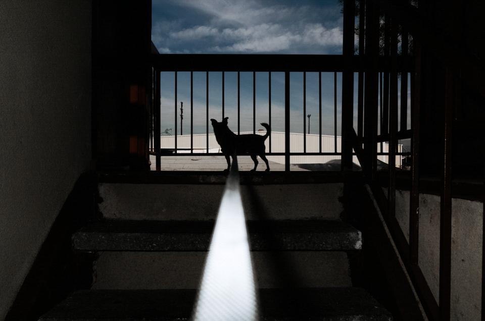 Dog, Kevin Samuels