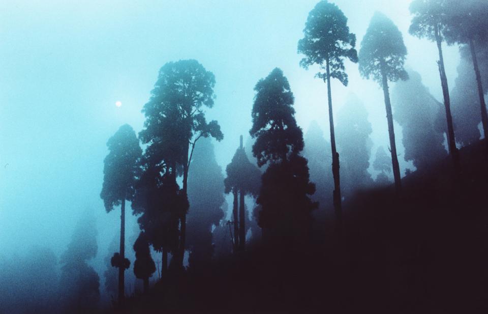 Fog, Darjeeling, 2009, © Sean Lotman
