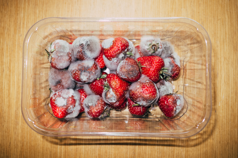 Rotting Strawberries – From 'All We Have Is Now'
